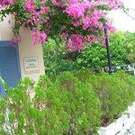 εισοδος  με ομορφη  ανθισμενη  μποκαβιλια