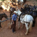 Hitching post at Supai Tunnel