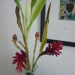 flores tristes en cuarto