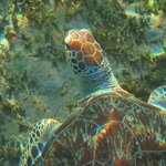 oh !!! une des tortues