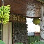 Plátanos para desayunar