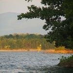 Roadrunner tree (sunset)