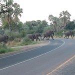 elefantes cruzando a pista visto da porta do hotel, todo dia é assim.