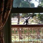 Balcony Magpie