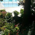 Pool /trädgård