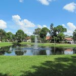 Les jolis petits étangs