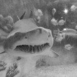Jenkinson Aquarium