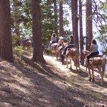 Riding Mules at North Rim