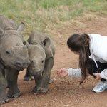 Baby Black Rhinos