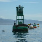 Outer Marina Buoy