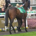 parade ring/stand my ground