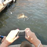Stopping to feed the turtles!