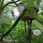 grimpette dans les arbres