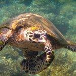 Coiba tortuga while snorkeling..