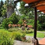 Jardines del Hotel Bambú desde la habitación