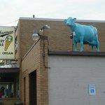 Sherman's famous blue cow