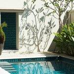 Frangipani tree shading the pool area