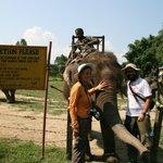 Safari con gli elefanti - Chitwan