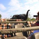 on safari at Mohlabetsi