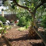 """jardin """"privé"""" de la suite"""