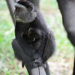 Blue Monkey Mommy and Baby
