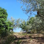 vegetazione agriturismo Foddi