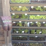 Bistro grows their own herbs