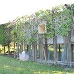 façade végétalisée