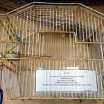 camera gratis per due uccellini al b&b, esterno suite passerotto