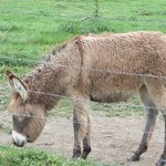 Another donkey