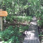 The Boardwalk Trail at River Bend