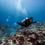 Niue Dive