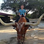 Longhorn photos