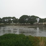 North side of park, Shoreline RV Park