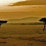 Masai Mara beauty!