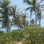 Auf der Insel Paradiso, Tolle Natur