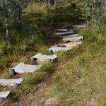 The path trough the park