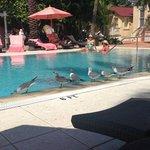 birdies enjoying the pool