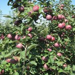 Centennial Farms and Orchards