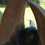Kolibri beim Bad im Brunnen