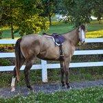 Secret under saddle
