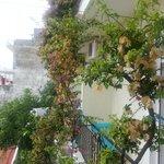 magnolia tree on our balcony