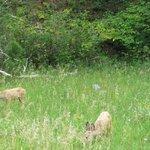 Deer nearby