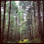 Valdes mid-island hike
