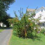 pomegranate tree on Smith island