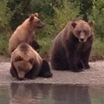 Added bonus to High Adventure fishing is the bear viewing