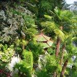 """zicht op de """"japanse"""" tuin"""