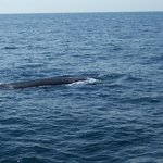 Fin whale while on boat tour.