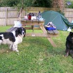 Campsite owners' dog, Smuggler, makes friends with our mutt.