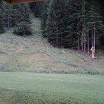 Caprioli nel bosco retrostante
